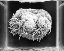 15 životnih parazita – 1. deo