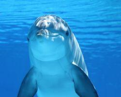 Isceljujuća moć delfina